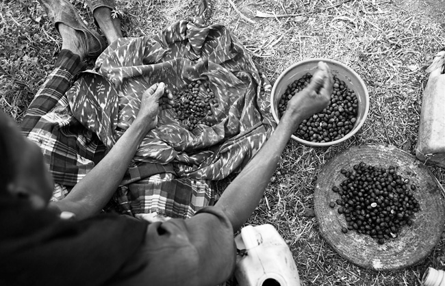 A woman shelling coffee beans